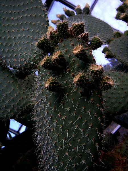 Cacti 02.jpg