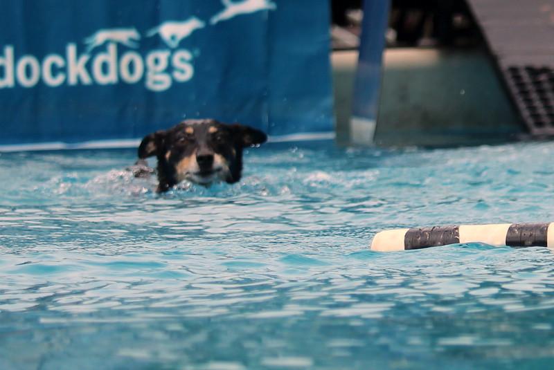 Dock Dogs at Fair-048.JPG