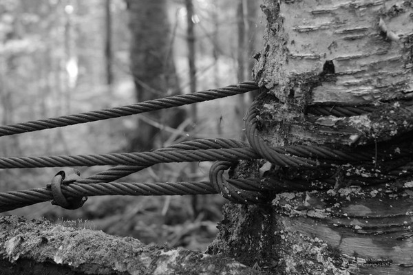 Of Days Gone By ... Cable at dock on Pond In The River, The Rapid River, Middle Dam, Maine