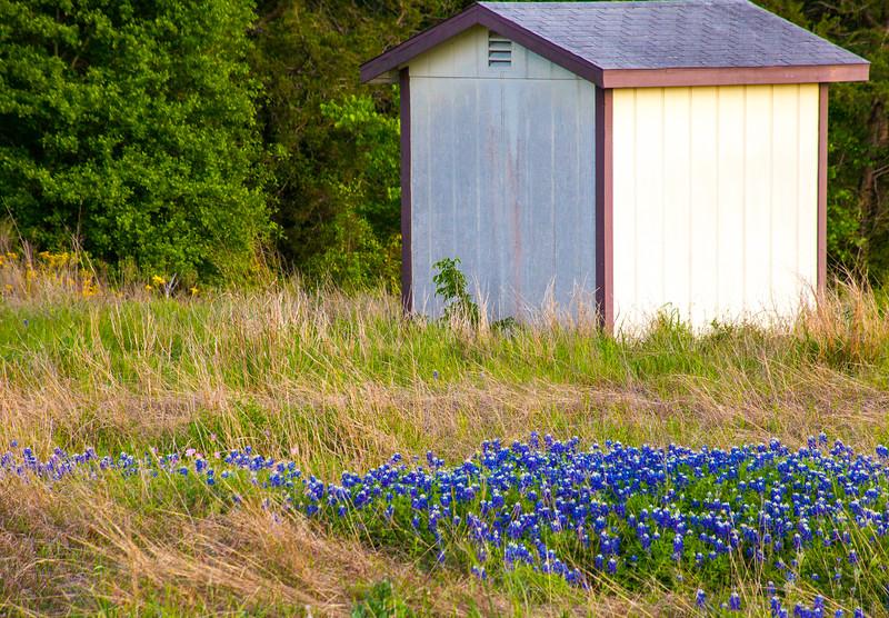 2016_4_9 Texas Wildflower Shoot-8962.jpg
