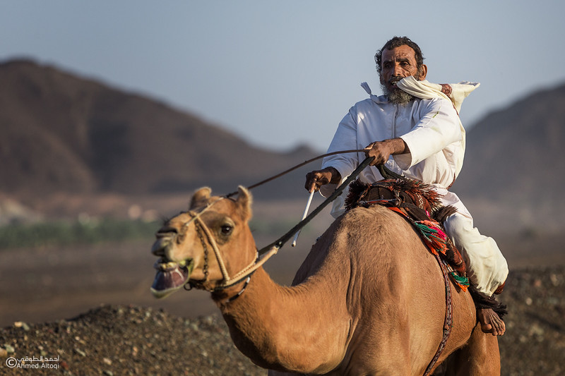 IMGL8862A copy2- Camel Race.jpg