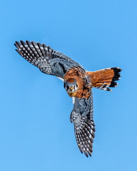 Kestrel Banch Removed-8628.jpg