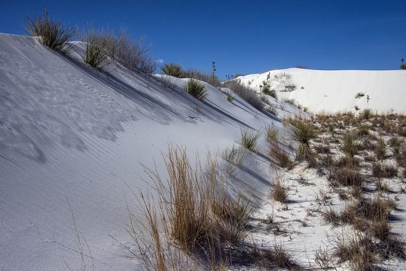 DSC_2930 AR white sands tNEF ps-.jpg