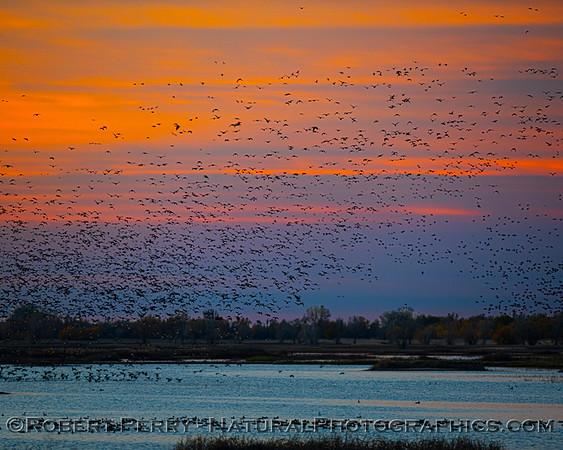 Sunrise 2020 12-10 Llano Seco
