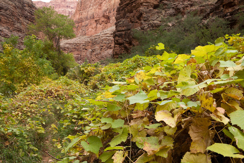 Grand Canyon October-0601.jpg