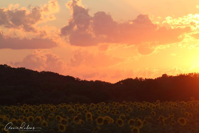 Rubens_IMG_9224 sunflowersunset.jpg