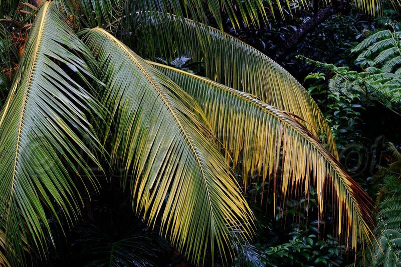 Honduras 0039_.jpg