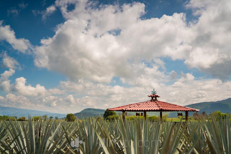 tequila-2-2.jpg