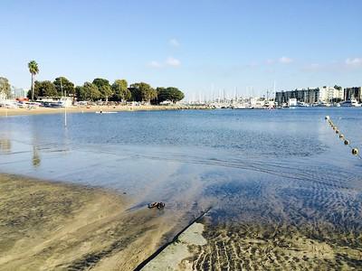 2014 - USA - California - Los Angeles - Marina del Rey - Venice Beach