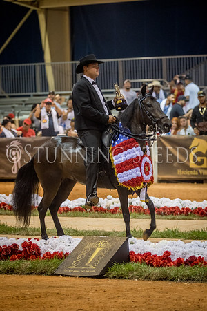 317-Fino Mares and Fillies Championship