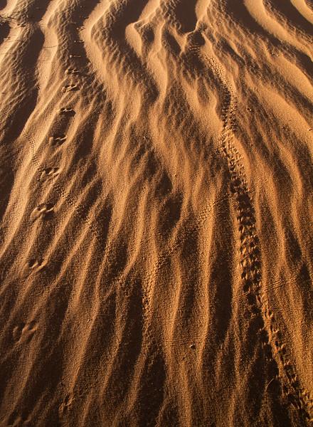tracks in sand.jpg