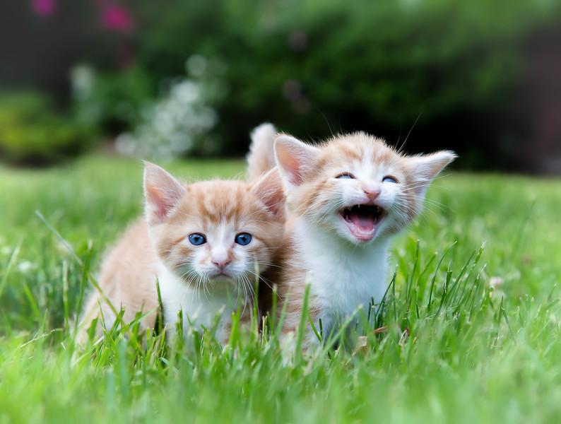 Kittens2jun14-3854-Edit.jpg