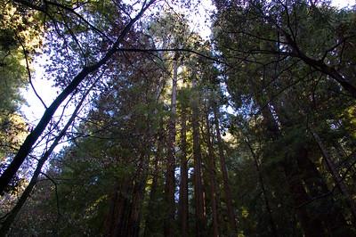 San Francisco, Tiburon, Muir Woods