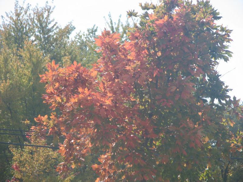 Fall pics 2008 022.jpg