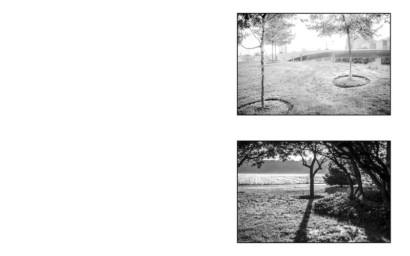 Forest Within_saddle_12.jpg