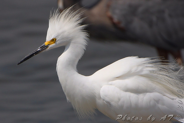 2009-08-27 Riverlands Migratory Bird Sanctuary