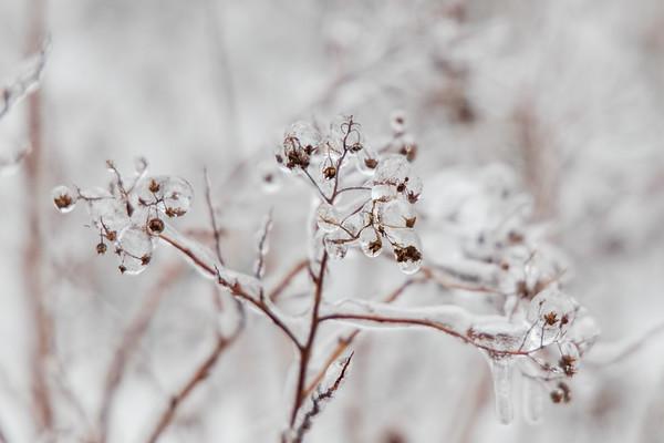 Ice Storm (2021-02-14)