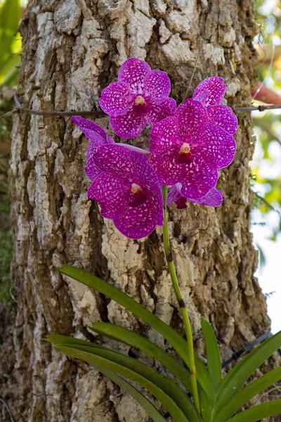 naples_botanical_garden_0049-LR.jpg