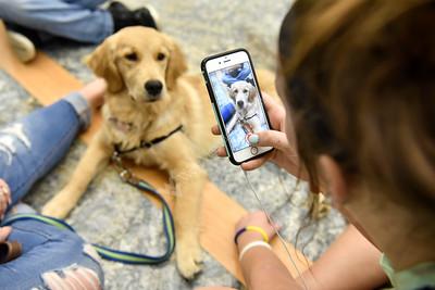 31832 Service Dogs