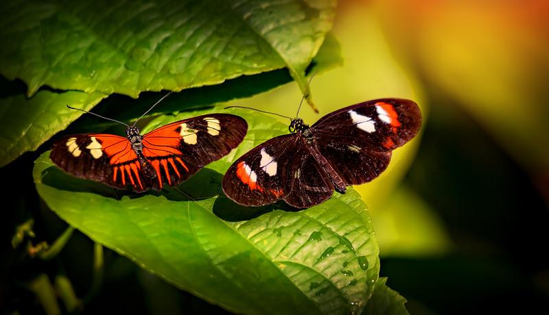 Butterfly-025.jpg