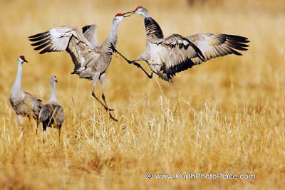 Nebraska Sandhill Crane Migration Exhibition