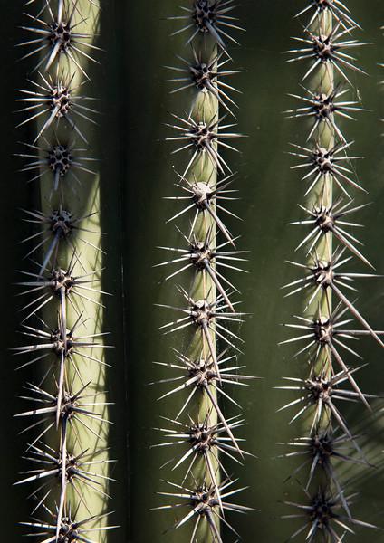 Arizona_090617_1071.jpg