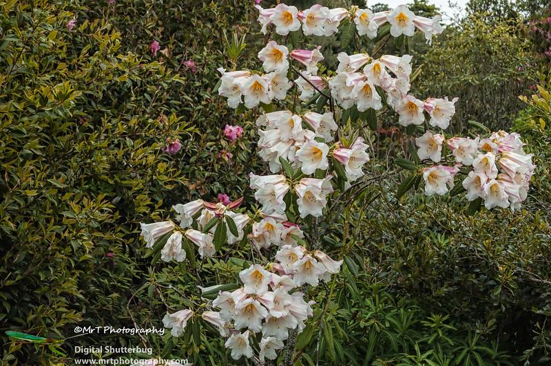 20061028_hollard_garden_0105-Edit.jpg