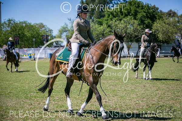 402a Heritage Stock Horse Hack n/e 15hh