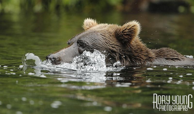 BearBubbles.jpg