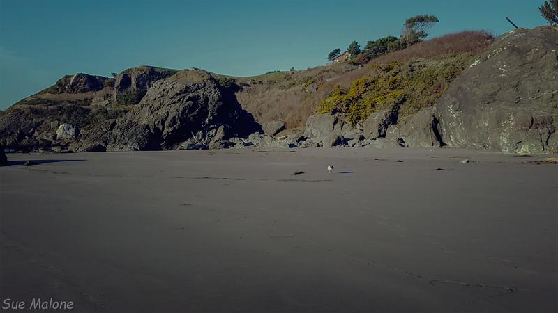 Harris Beach Afternoon-4.jpg