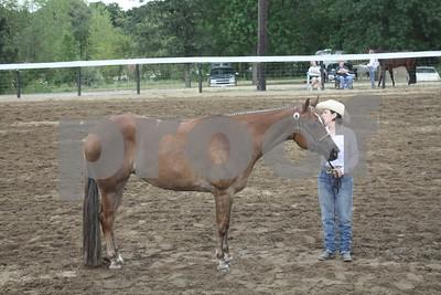 Iowa Associated Saddle Club