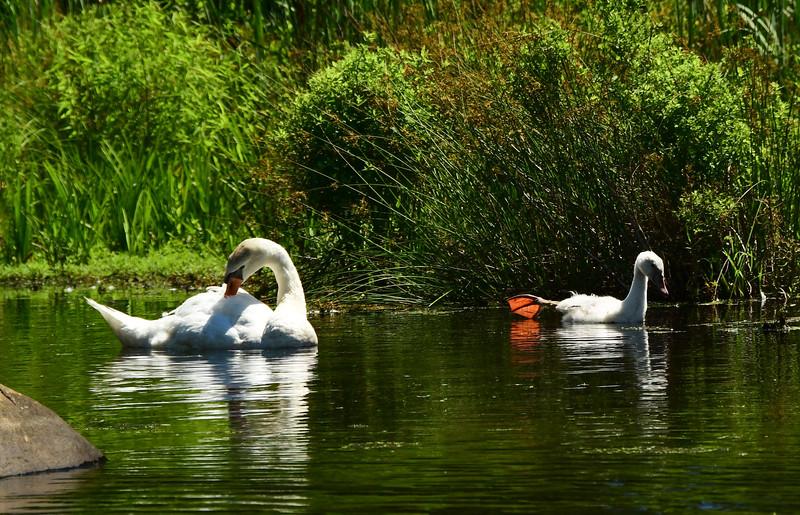 *2018-07-07 Monksville Reservoir Kayaking-untitled (115 of 256)-030.jpg