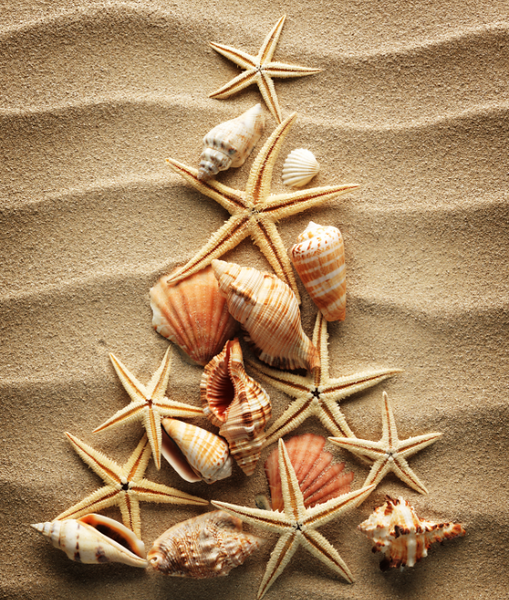 beach-shell-christmas-tree.png