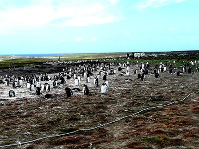1/31/2008 Port Stanley, Falkland Islands, UK