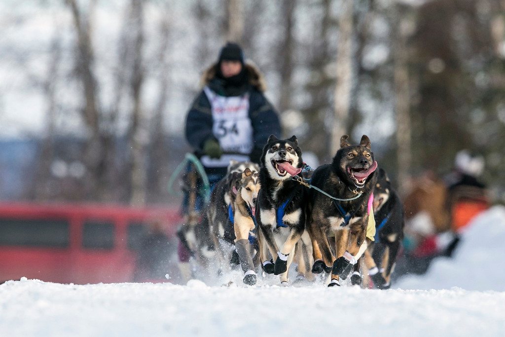 . Jessica Hendricks\' team races down the trail at the re-start of the Iditarod dog sled race in Willow, Alaska March 3, 2013. From Willow, the race runs for almost 1000 miles as it crosses the state. REUTERS/Nathaniel Wilder