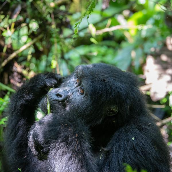 Uganda_T_Gor-140.jpg