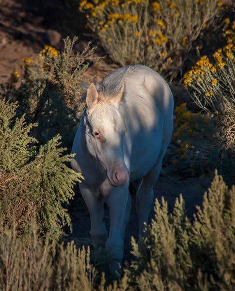 Wild White Foal Near Route 6 #1