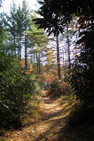 Panthertown Valley Trail - 3,740'