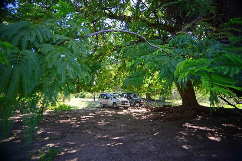 the giant guanacaste (the national tree of Costa Rica) is at a ranch site dating back to missionary times