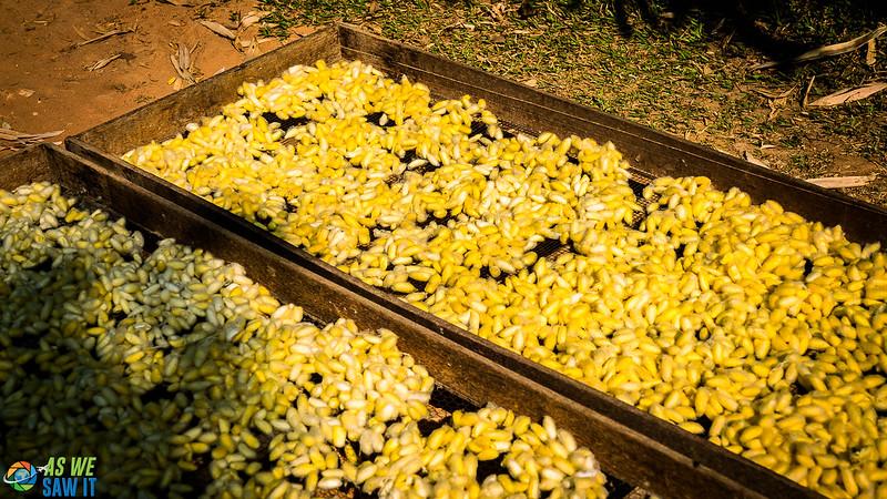 Silk-Farm-01742.jpg