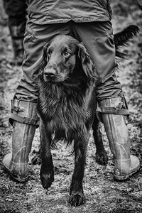 Flatcoated Retriever Society Field Trial