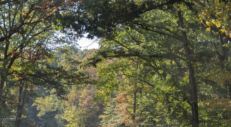 2012-10-17 at 12-38-07-2.jpg