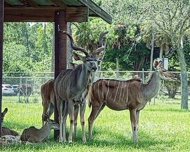 Lion Country Safari. June 2020