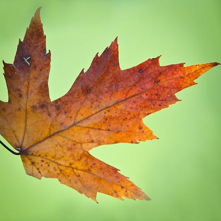 Last leaves of 2012