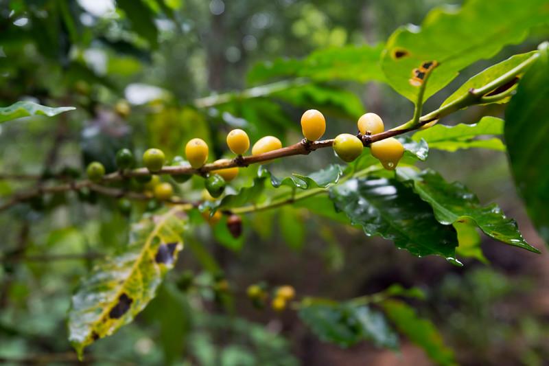 Pratt_Belize_26.jpg