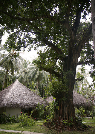 Kuramathi, Rasdhoo Atoll, November 2008