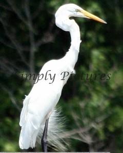 egret 13