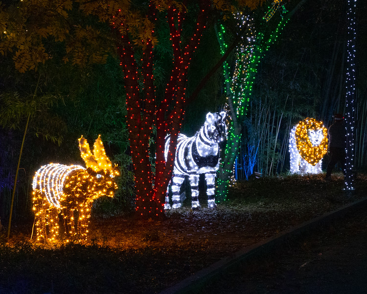 Dallas Zoo Lights