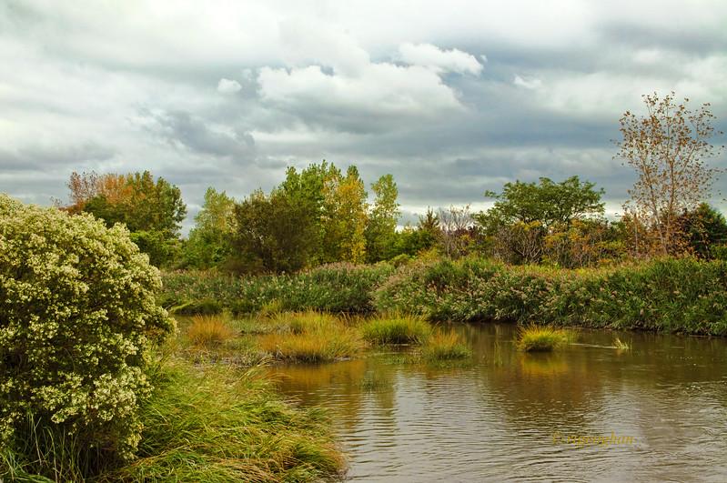 Sept 20_Mill Creek Marsh_0347.jpg