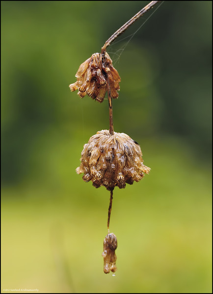 From nature's own jewellery collection.........